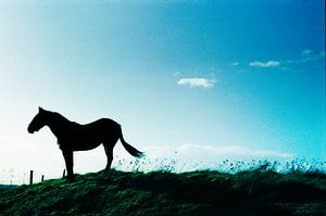 Tophit horse on hill