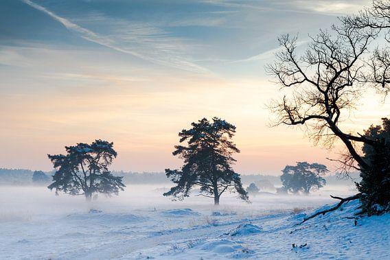 Winterschemering op de Hoge Veluwe van Jaap Meijer