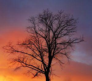 Een kale boom.