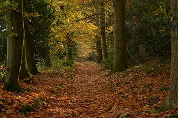 Oranjewoud bosgebied van Michel Aalders