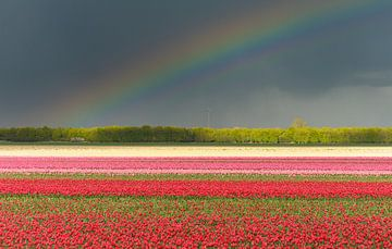Tulpen im Polder von Arjan Keers