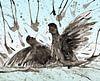 Kämpfende Blässhühner von Bianca Wisseloo Miniaturansicht