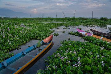 Fischerboote zwischen der Vegetation auf dem See Rawapening in Zentraljava, Indonesien von Anges van der Logt