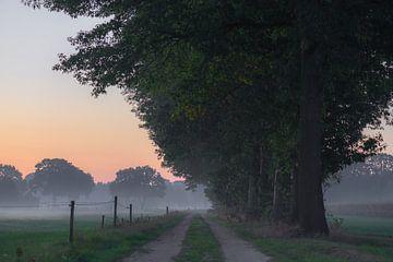 ochtendwandeling onder de bomen van Tania Perneel