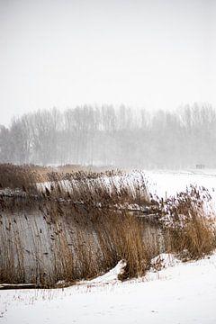 Winter aan de uiterwaarden van de ijssel