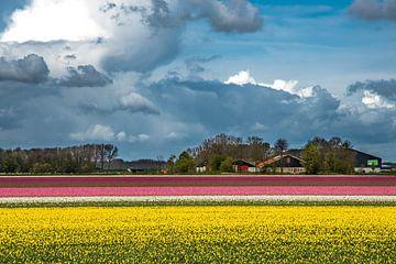 Bloembollenveld met wolken van Herman Coumans