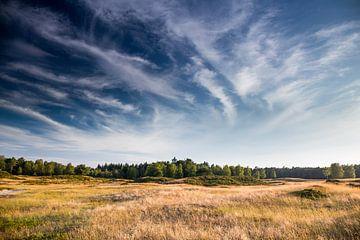 Uitzicht over de heide Heidestein, Zeist (NL) van Sjaak den Breeje
