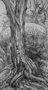 Schwarze und weiße Wildnisse von KB Prints
