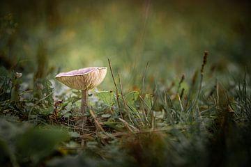 Auf einem großen Pilz von Danique van Gurp