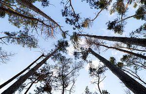 Hoge bomen vangen veel zon