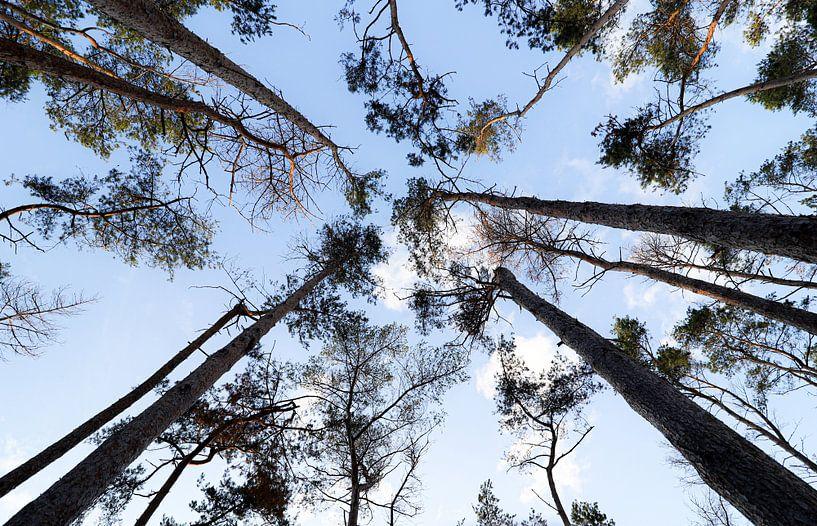 Hoge bomen vangen veel zon van Ken Huysmans