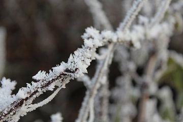 Wit als sneeuw  von Amber Garrits