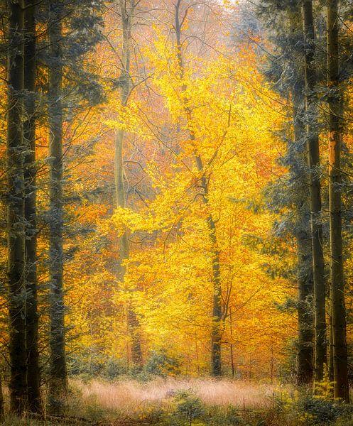 Herfst in de bossen bij Gasselte, Nederland van Sjaak den Breeje Landschapsfotografie