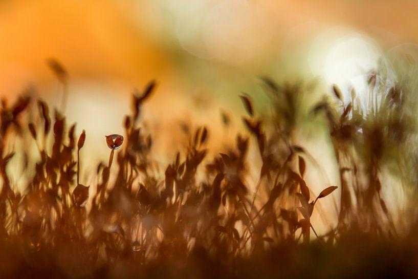 Soft moss van Irene Lommers