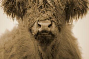 Schotse hooglander kalf kop sepia van Sascha van Dam
