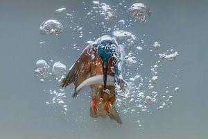 Vissende ijsvogel van Tariq La Brijn
