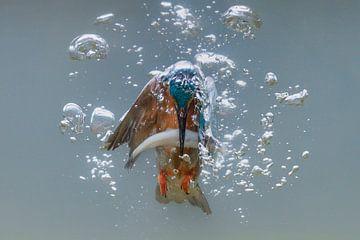 Vissende ijsvogel von Tariq La Brijn