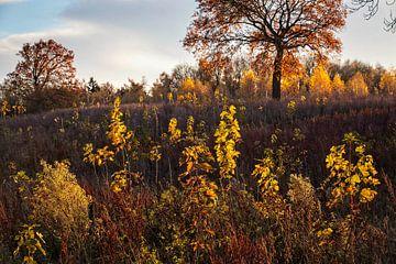 Herfst in Nijswiller van Rob Boon