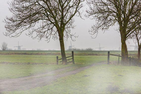 Kinderdijk over de dijk met mist in het weiland