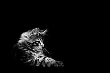 Kitten van Hilda Koopmans