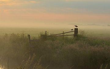 Schöner Morgen.... von Ruud Scherpenisse