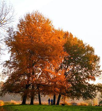 Oranjeboom von Peter Heins