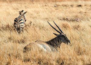 Antilope: Eten