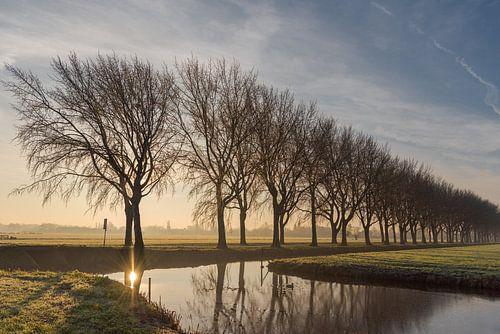 Bomenrij in polderlandschap in de Alblasserwaard.