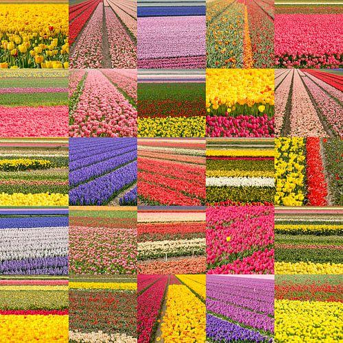 Blumenfeldercollage von