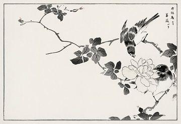 Blaues Rotkehlchen und Rose Illustration von Numata Kashu von Studio POPPY