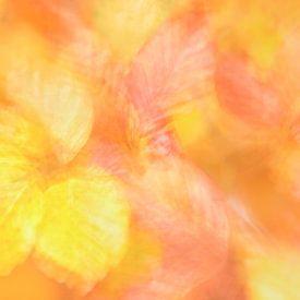 Autumn leafs von Rolf Schnepp