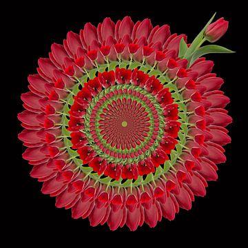 tulpen - krans van Klaartje Majoor