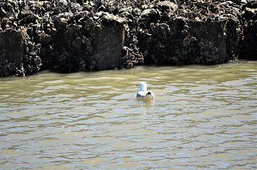 Möwe im Wasser von Philipp Klassen