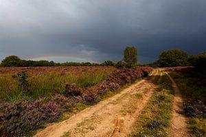 Regenboog en Heide