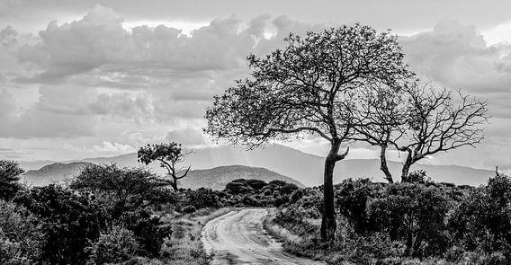 Afrika van Alex Hiemstra