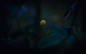 Licht in der Dunkelheit (Hopfenklee) von Niek De Ridder