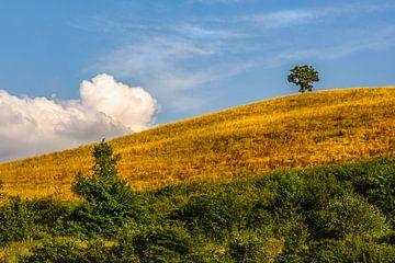 Eenzame boom in de Abruzzen van Ron van Ewijk