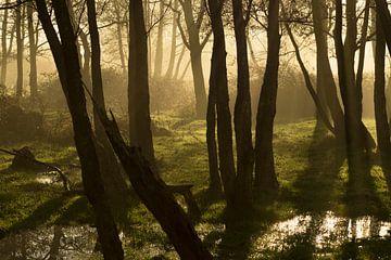 Mystic morning van Birgitte Bergman