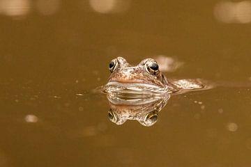 Frosch Porträt von Marjan Slaats