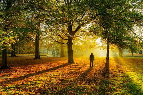 Autumn colors von Jeroen Kleiberg