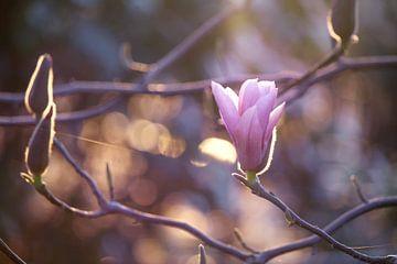 Magnolia von Jessica Van Wynsberge