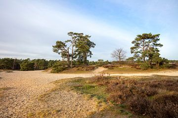 Zandvlakte met heide en bomen van Edwin Butter