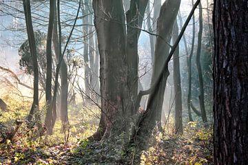 Märchenwald in Castricum von Shirley Douwstra