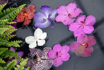 gekleurde bloemetjes in het water van
