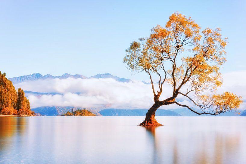 That Wanaka Tree (Golden) van Cho Tang