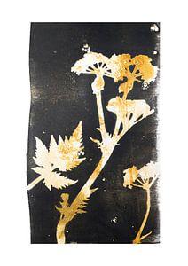 Botanische planten en bloemen afdruk Fluitenkruid