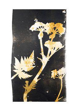 Plantes botaniques et fleurs print Whistlewort sur Angela Peters