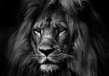 de leeuw zwart wit van Bert Hooijer