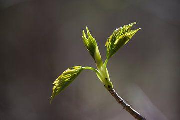 Frühlingsfrisch von Theo van Woerden