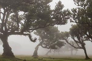 Sprookjesbos op Madeira island